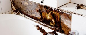 Mold Damage Restoration & Removal Company Milwaukee