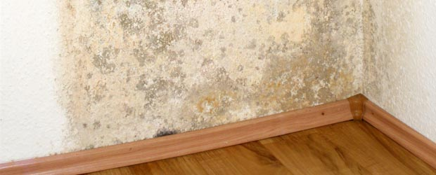 mold-remediation-page